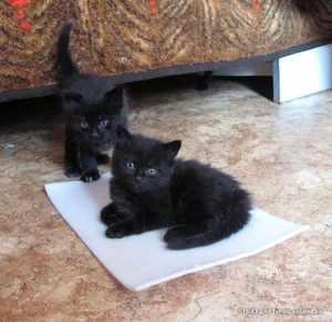 Как придумать кличку котенку