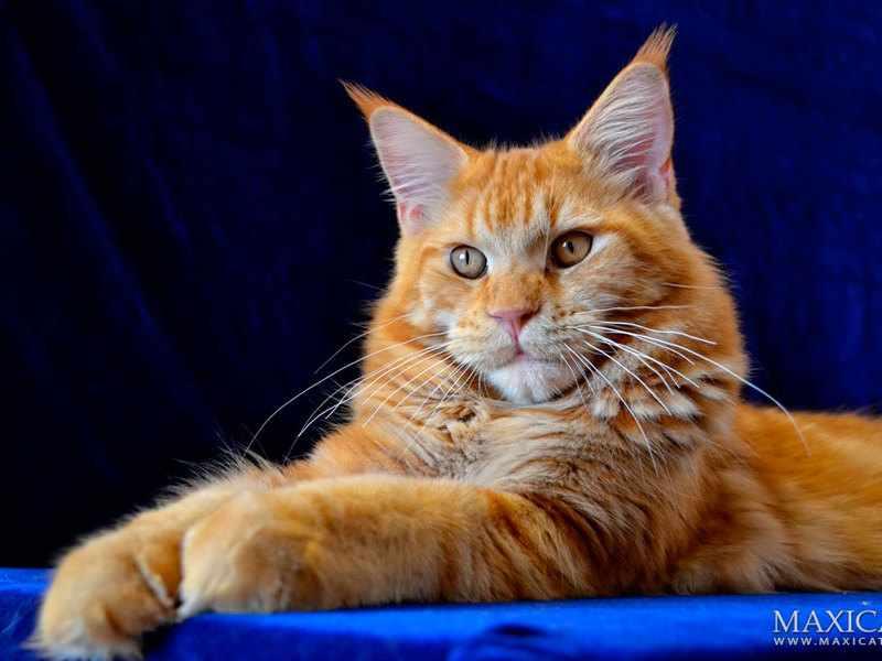 Данные кошек