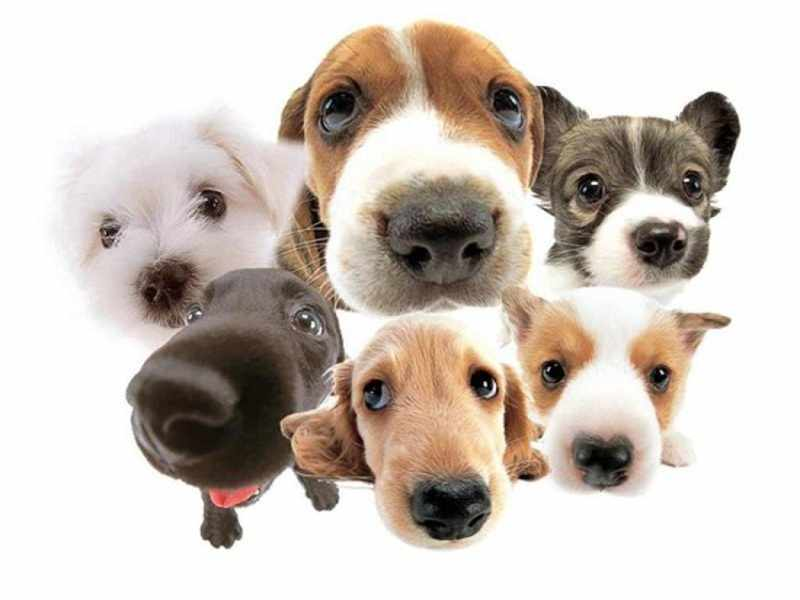 Как можно узнать породу собаки - помощь специалистов