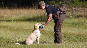 Как правильно учить собак командам