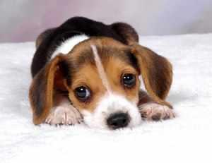 Правильный уход за щенками