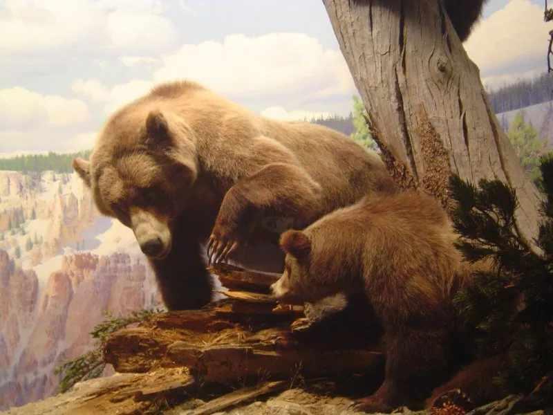 Пещерный медведь с потомством