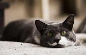 Стоп-стресс-для-кошек-отзывы