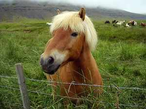 Как определеить возраст лошади