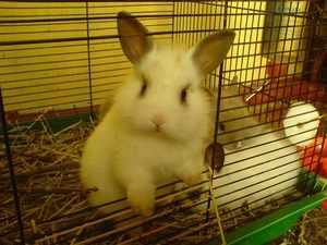Декоративные кролики в клетке - как обустроить