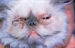 Почему у кошки аллергия