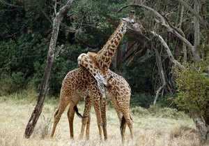 Какие животные живут в Африке