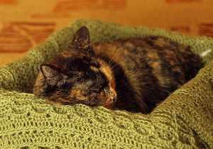 Кошка спит
