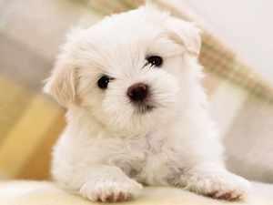Как избежать микоплазмоза у собак