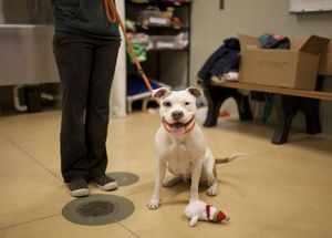 Какими способами приучить щенков