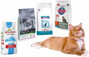 Чем кормить котов после кастрации