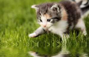 Причины, по которым кошка боится воды