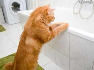 Как помочь коту привыкнуть к купанию
