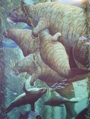 Морская корова гидрадамалис Куэста