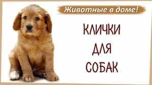 Собачьи клички