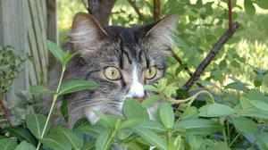 Какие запахи не любят коты и кошки