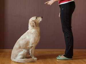 Учим собаку сидеть