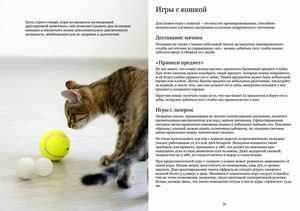 Дрессировка кошки в домашних условиях