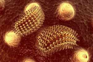 Бактерии бешенства