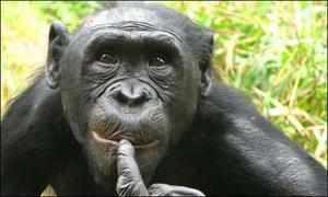 Нрав обезьян