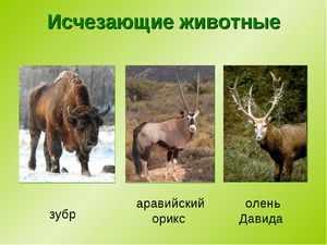 Не существующие виды животных на сегодняшний день