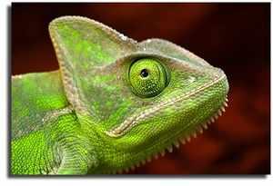 Рептилии и их виды