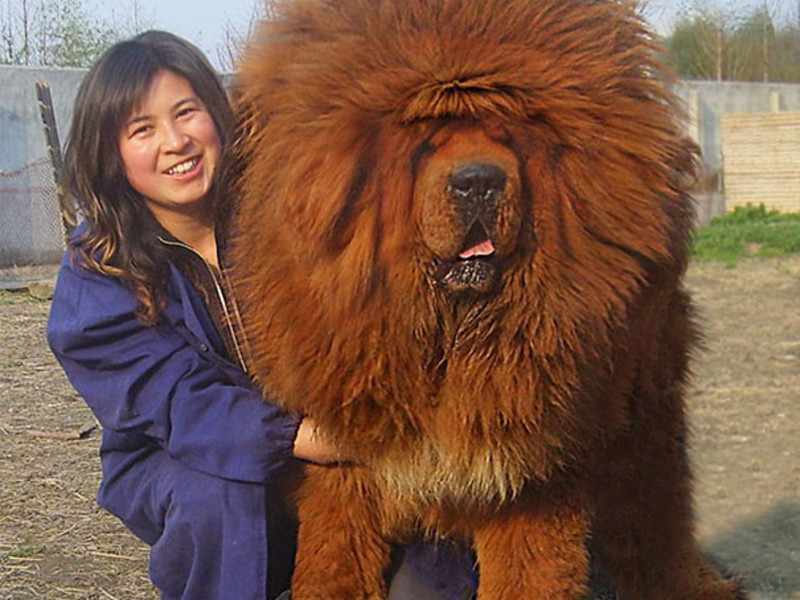 Какие породы собак самые большие