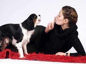 Как отучить собаку лаять дома - полезные советы