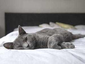 Симптомы у кошек