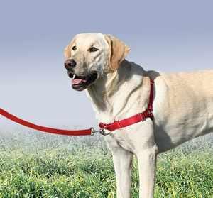 Как правильно одеть на собаку шлейки