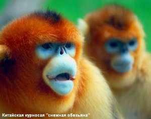 Характеристики пород обезьян