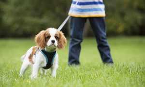 Как приучить собаку ходить на улицу в туалет
