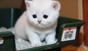 Белый котенок на лотке
