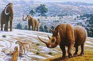 Шерстистый носорог-доисторические животные