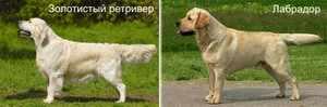 Описание пород собак