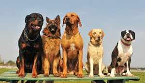 Как ухаживать за собаками