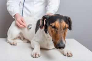 Диагностика панкреатита и лечение собак