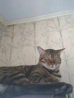 Поздняя кастрация кота