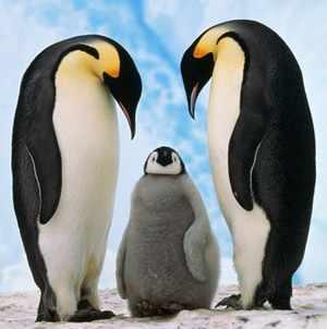 Чем питаются пингвины