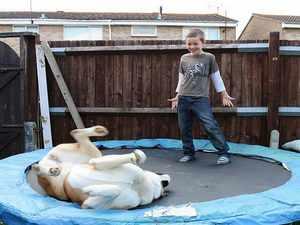 Где можно приобрести собаку американская акита