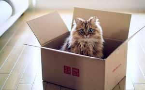Зачем котам коробки