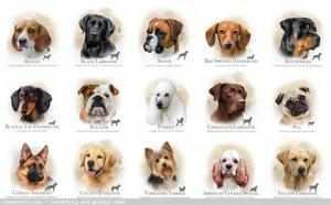 Собачьи современные клички