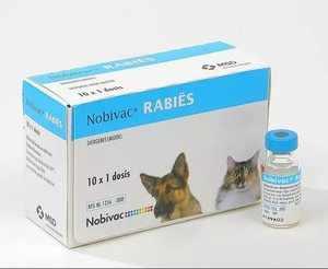 Возможные побочные явления и осложнения при применении вакцины Нобивак