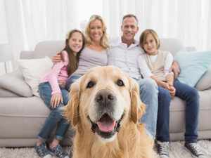 Принимаем роды у собаки