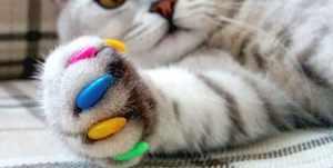 Разноцветные антицарапки