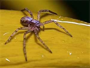 Почему у паука целых 8 лап