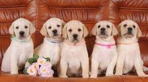 Красивые клички для собак
