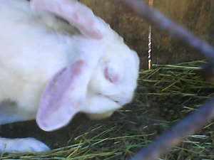 Препараты для лечения кроликов