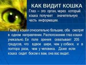 Даже если кошка сидит боком к вам, она видит вас