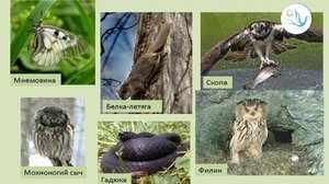 Список животных под угрозой на сегодняшний день